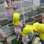 ナスの収穫画像